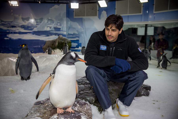 Sidharth Malhotra celebrates World Penguin Day with his bud and it is just adorable