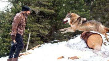 Salman Khan BATTLES Wild Wolves In This Fantastic New Promo Of Tiger Zinda Hai